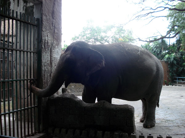 animals should not be kept in zoos essay Should animals be kept in zoos zoos are premises for the captivity of animals, often in urban areas where many of the animals would not otherwise be found, with the intention of studying the animals and displaying them to the public at large.