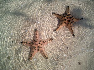 also known as sea star