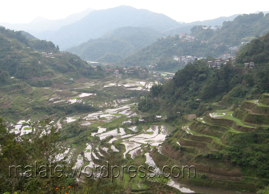 Banawe Rice Terraces