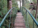 hanging-bridge1