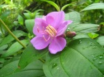 posy blossom