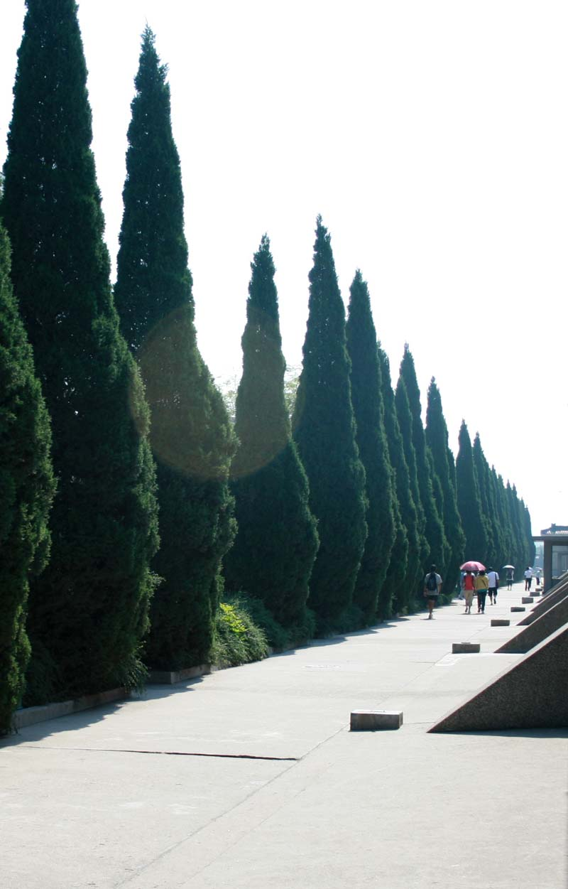 as always, fascinated with cypress trees