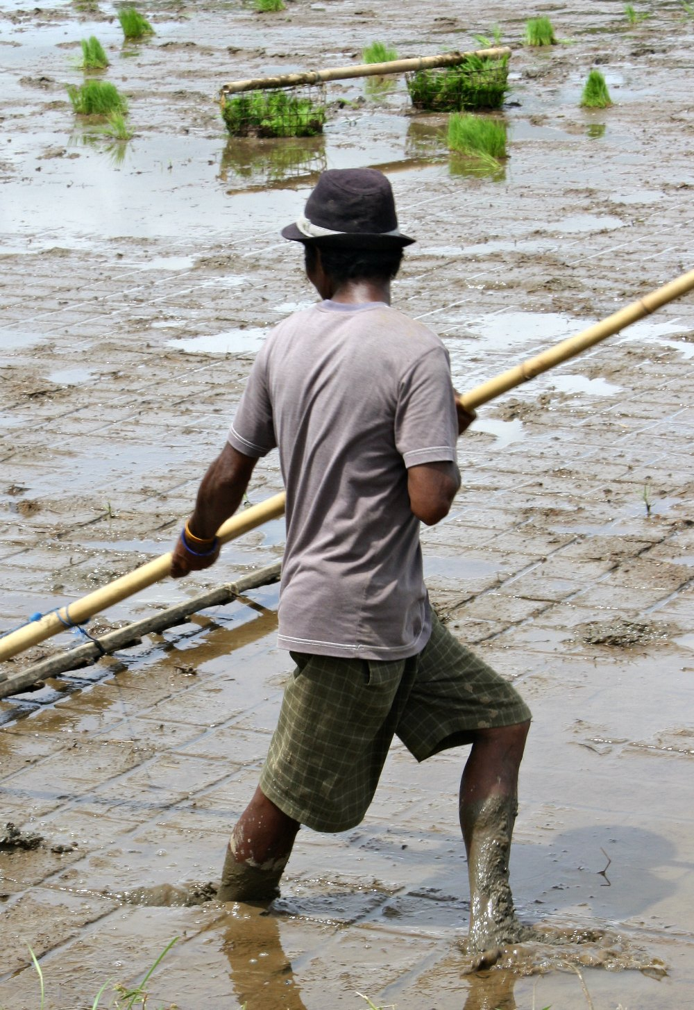 Rice field worker, Monte Calvario, Buhi Camarines Sur