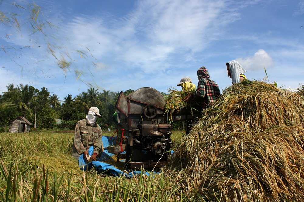 Rice threshing, San Jose, Iriga City Camarines Sur