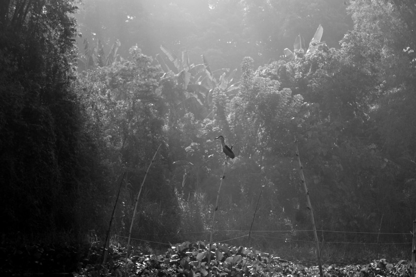 ANGAT RIVER by Elmer Nev Valenzuela_05C