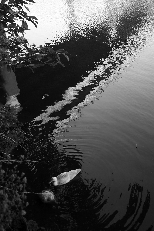 ANGAT RIVER by Elmer Nev Valenzuela_06a