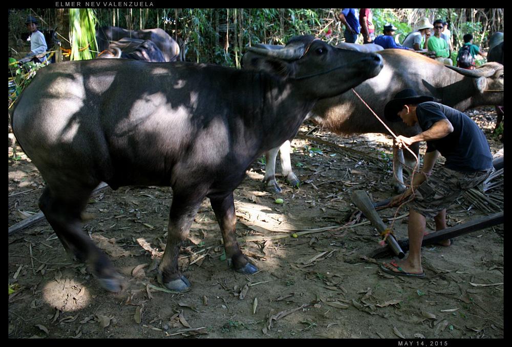 The Beasts of Lumbac by Elmer Nev Valenzuela_0000010
