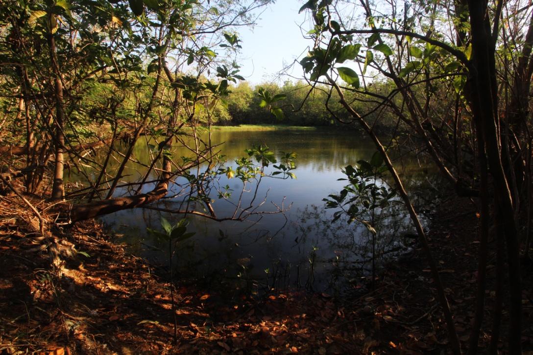 Pond #1 of the Las Piñas-Parañaque Critical Habitat and Ecotourism Area.