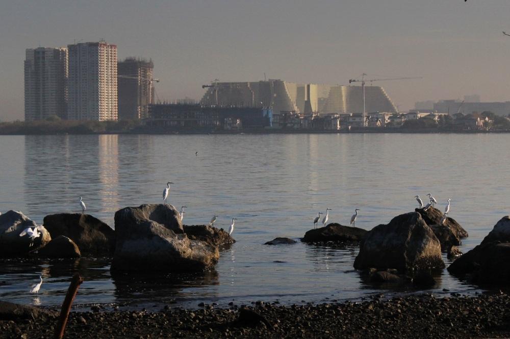 Migrant birds along the coast of Manila bay