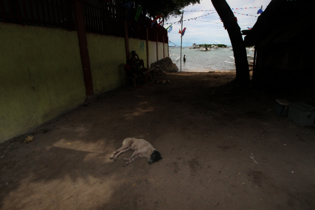 A dog lazing the afternoon in Olango Island