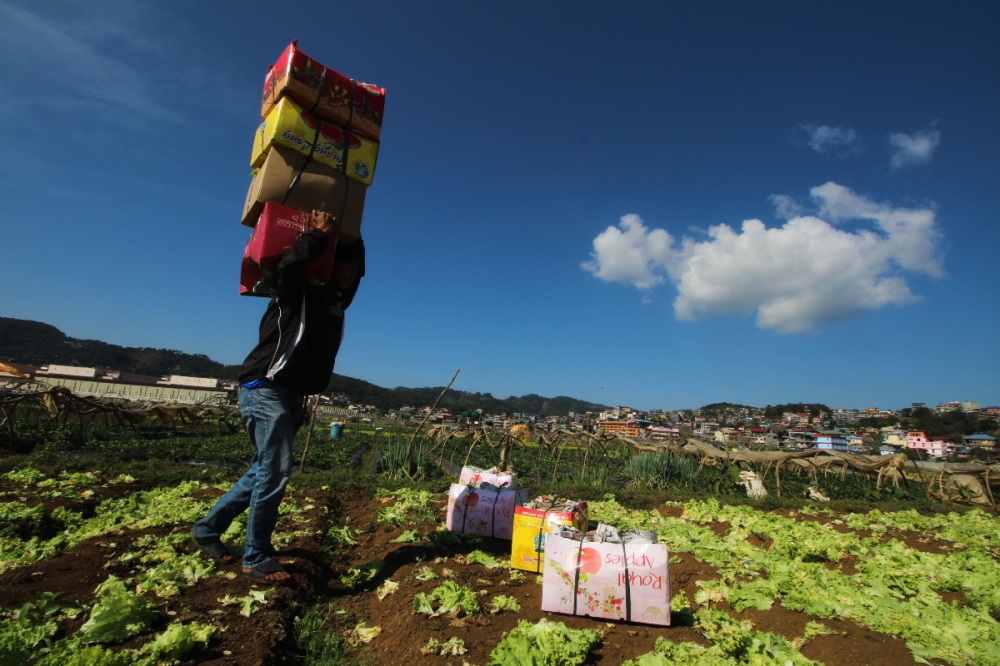 A man carries boxes of lettuce as harvest